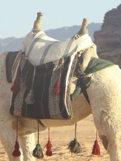 Bedouin camel saddle