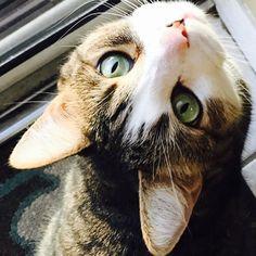 We love cats too#cateyes #cat #sarasota