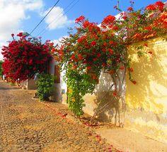 "Cape Verde | ""Cape Verde - Flowers"" by PicturedIt"
