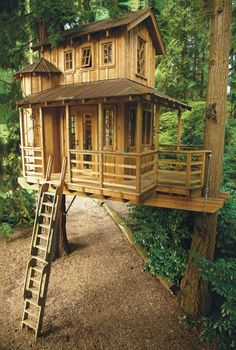 Miss tree houses im_Wald