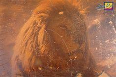 Maler Mannheim löwe als fresko auf edelputz als wandgestaltung cavallo