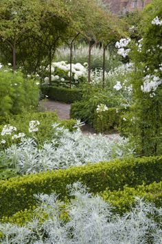 Planting in box hedging and over a pergola in the White Garden at Sissinghurst Castle Garden, near Cranbrook, Kent