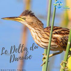 Découvrez le Delta du Danube Danube Delta, Parcs, Romania, Green, Tourism