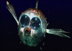 【画像】深海生物を集めてみた - サイエンス☆GEEK