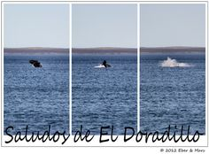 Puerto Madryn, Chubut (Argentina) ballenas / whales, via Flickr.