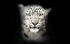 Schneeleopard © Morten Koldby / WWF
