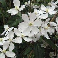 Les 10 meilleures plantes à fleurs odorantes