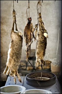 naturepunk: The Passion (by Peter Juerges) Lauder Rabbit Hunting, Homemade Trail Mix, Turkey Calling, Wild Game Recipes, Pheasant Hunting, Survival Instinct, Turkey Hunting, Passion, Food