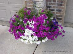 Gardening: Wave Petunias