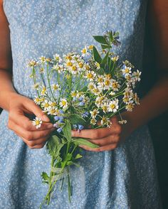 Image shared by Blippy. Find images and videos about vintage, flowers and daisy on We Heart It - the app to get lost in what you love. Wild Flowers, Beautiful Flowers, Daisy Flowers, Lifestyle Fotografie, Style Hipster, No Rain, My Flower, Dahlia, Planting Flowers