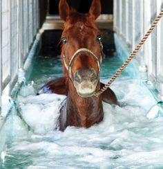 This is either a 5 Star Hotel for horses ... or... an aqua horse treadmill for rehab and fitness....................probably both!!!