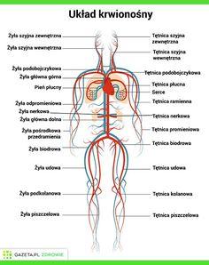 Pharmacy School, Medical School, Medical Dental, School Subjects, Midwifery, School Notes, School Hacks, Study Notes, Study Motivation