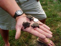 Tiny Turtles!