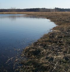 Finally, the water's edge... by Carly at Neponset Watershed, via Flickr