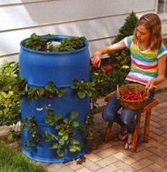 Rooftop Terrace Design, Strawberry Planters, Aquaponics, Barrel, Planter Pots, Home And Garden, Herbs, Green, Projects