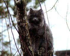 Kiri ( stray cat)