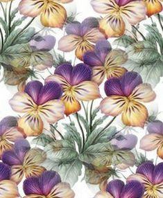 Květ pozadí 56 Plants, Blog, Blogging, Plant, Planets