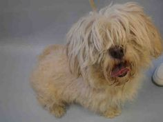 SUPER URGENT - CHANCE - A1098145 - - Manhattan  Please Share:TO BE DESTROYED 12/02/16  **NEW HOPE RESCUE ONLY** -  Click for info & Current Status: http://nycdogs.urgentpodr.org/chance-a1098145/