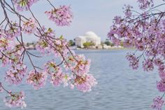 5 Great Spots to See Cherry Trees in Washington DC: Cherry Blossoms Off the Beaten Path Around the Nation's Capital