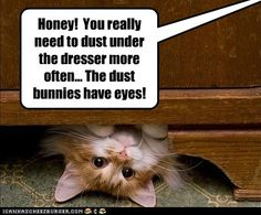 Honey! You really need to dust under the dresser more often…The dust bunnies have eyes!
