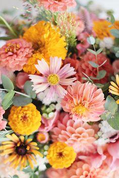 Cosmos Flowers, Cut Flowers, Fresh Flowers, Yellow Flowers, Pink Yellow, Flower Farmer, Cut Flower Garden, Seasonal Flowers, Zinnias