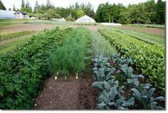 Planning Our Organic Market Garden - The Permaculture Research Institute