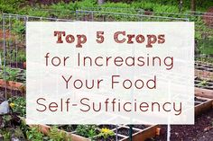 Increasing Food Self-Sufficiency :: Five Little Homesteaders