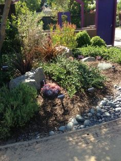 Some examples of drought tolerant native landscapes from The Water Conservation Garden in San Diego