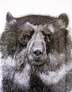 .bear art