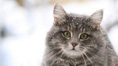 Fonds d'écran de chat en Full HD !