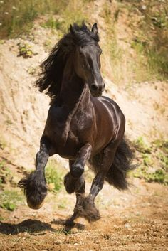 Friesian Gallops - Blog | Professionelle Pferdefotografie München | BR Photographs Claudia und Sven Rahlmeier