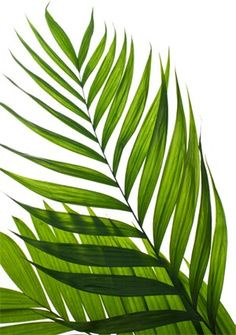 Entry Into the Paschal Mystery – A Reflection for Palm Sunday - - Plant Painting, Plant Art, Leaf Wall Art, Leaf Art, Botanical Wall Art, Botanical Prints, Tropical Leaves, Tropical Plants, Palm Sunday