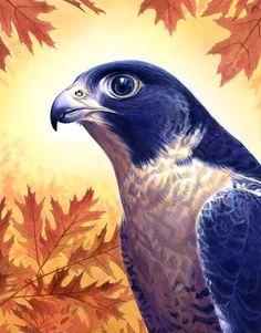 falcon. Alan Hawley