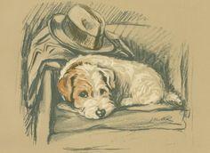 Portrait of a Sealyham, antique print, by Lucy Dawson