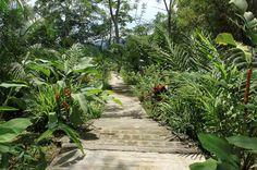 pura vida gardens stairs   - Costa Rica