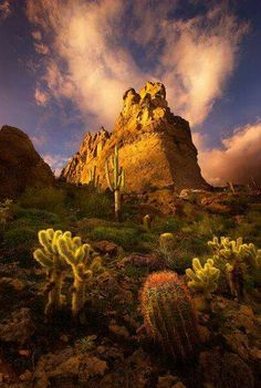 A variety of desert foliage including Saguaro, Barrel and Cholla Cactus showcased by some fortuitous lighting conditions in Arizona& Superstition Mountains at sunset. All Nature, Amazing Nature, Superstition Mountains Arizona, Arizona Mountains, Places To Travel, Places To See, Beautiful World, Beautiful Places, Amazing Places