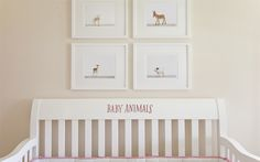 Sophisticated Art for Baby's Nursery. Shop our charming collection of Baby Animals at The Animal Print Shop by Sharon Montrose. Come see Baby Monkeys, Baby Porcupines, and more!