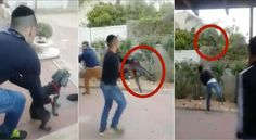 Israeli teen throws helpless dog over high fence while his friends laugh! Act Now! | YouSignAnimals.org