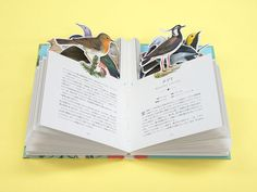 週末読みたい本『My Picture Book 世界の鳥』『My Picture Book 世界の花』 | 箱庭 haconiwa|女子クリエーターのためのライフスタイル作りマガジン