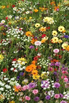 Wild Flower Meadow, Flower Farm, My Flower, Wild Flowers, Meadow Flowers, Nature Aesthetic, Flower Aesthetic, Plantation, Beautiful Landscapes
