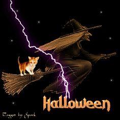 Halloween Witch Witch Halloween Happy Halloween Graphic Halloween Quote  Halloween Greeting