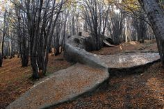 This is a life sized blue whale sculpture in the woods of Ushuaia, Argentina by artist Adrian Villar Rojas.