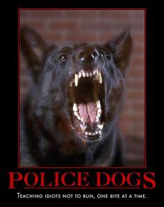 Google Image Result for http://www.sportwaffenk9.com/images/Police.K9.jpg