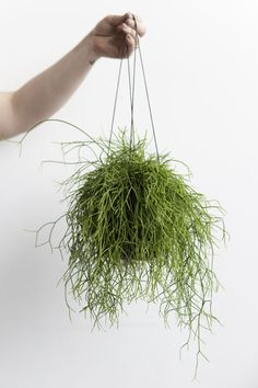 Alyssa Hoppe for Design Love Fest// what is the name of this plant?