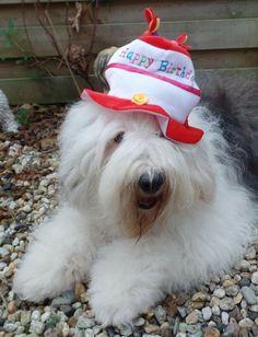 happy Birthday. Old English Sheepdog