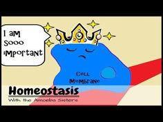 Homeostasis (and the Cell Membrane King) - YouTube