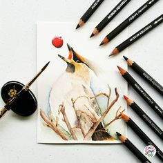 Oh my!!! Before I got this set of Caran D'ache Museum Aquarelle I already researched about the product. A lot are saying that these are probably the most expensive watercolor pencils in the market as well the Luminance variant which are the regular...