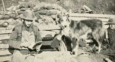 Nell, a British messenger dog who worked throughout the war