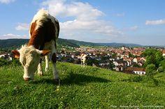 © PARRIAUX Fabrice La Capitale du Haut-Doubs : une ville à la montagne ! Wordpress, Images, Animals, Mountain, City, Animales, Animaux, Animal, Animais