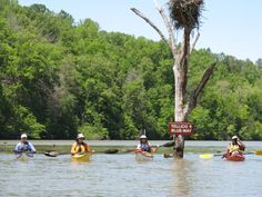 Looking to paddle your way through East Tennessee? Want to see some of the tributaries that feed into the Tennessee River? This trip plan will help you do just that! Travel through four very unique sections of the TRV in East Tennesse. Float Trip, Tennessee River, Two Rivers, Floating In Water, National Forest, Campsite, Paddle, Trip Planning, Adventure
